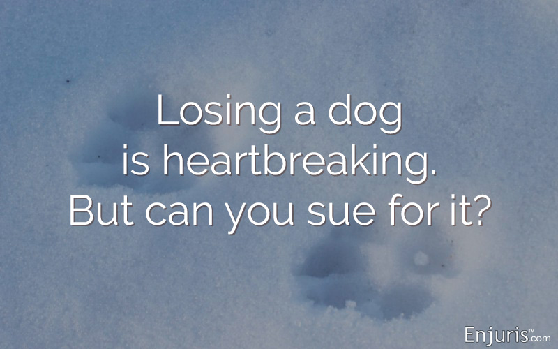 Losing a dog is heartbreaking. But can you sue for it?