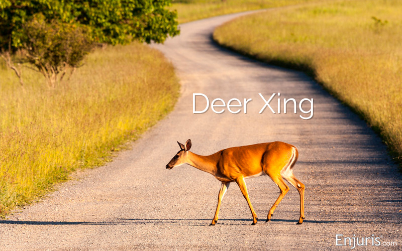 Worst states for deer-vehicle accidents
